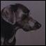 070330_list_dog