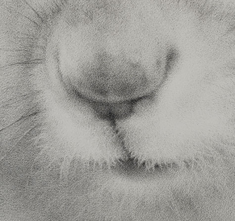 ART050710_squirrel_main