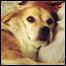 list_yeardog