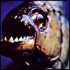 list5187720_piranhas[1]
