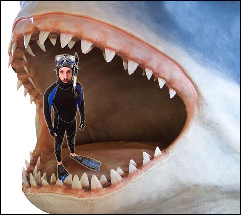 090622_sharks_main