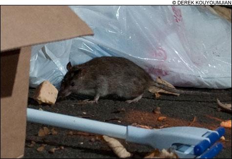 0911_RATS_main2
