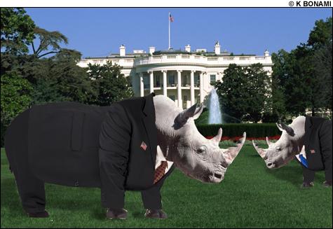 070803_rhinos_main