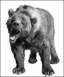 inside_bear