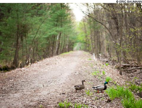 Bike Paths and Trails