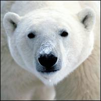 080613_bear_