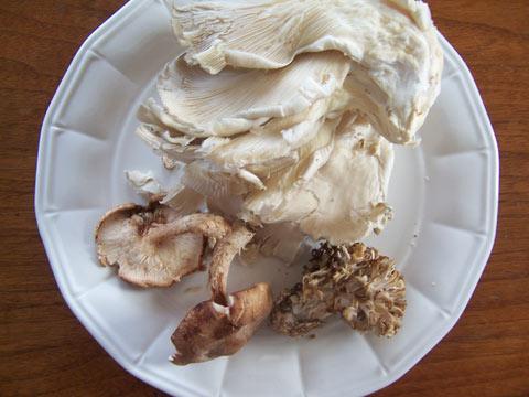 food_mushrooms_480