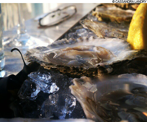 main_oysters_480
