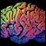 061222_list_brain