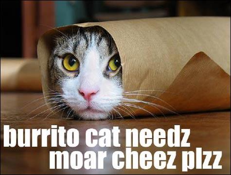 burritocat[1]isnide