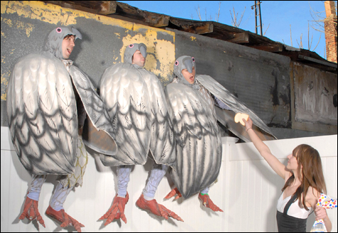 bishopallen.birdsinside