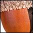 1003_acorn_list