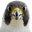 0613_Sum_Birds_list.jpg