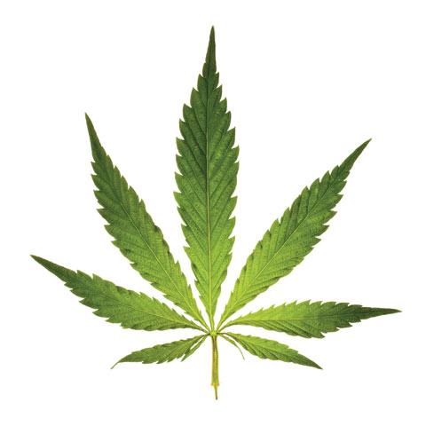 medicalmarijuana_faqs