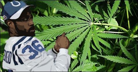 070330_marijuana_main