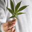Marijuana_list