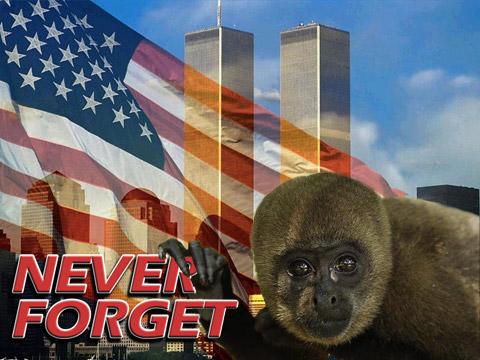 911 monkey