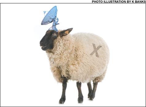 070928_sheep_main