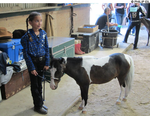 Mini-Horse-Show_main