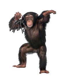 TJI_ChimpanzeeWKeys_main
