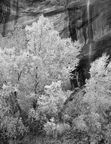 cottonwoods-waterfall_mai